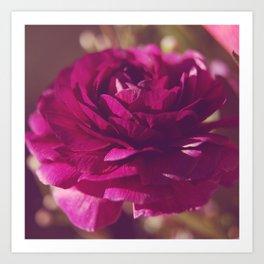 Crimson Rose Art Print