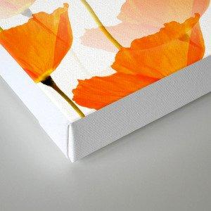Orange Poppies On A White Background #decor #society6 #buyart Canvas Print