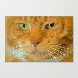 FELINE ORANGE Canvas Print