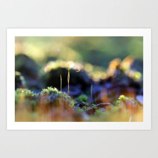 Moss Macro as the sun goes down Art Print