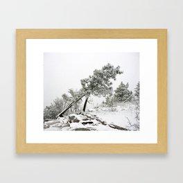 Snow Covered Trees Framed Art Print