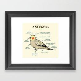 Anatomy of a Cockatiel Framed Art Print