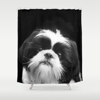 shih tzu Shower Curtains featuring Shih Tzu Dog by ritmo boxer designs