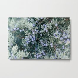 Botanical Gardens Evergreen #335 Metal Print