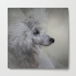 Longing - Silver Standard Poodle Metal Print