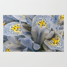 Blue and Yellow Dwarf Iris by Teresa Thompson Rug