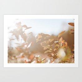 autumn on plantation Art Print