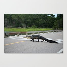 Alligator Right Of Way Canvas Print