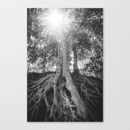 The Root Tree in Greenville, SC Canvas Print