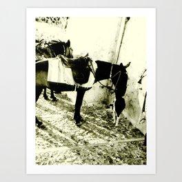 Donkey and Dog 1 Art Print