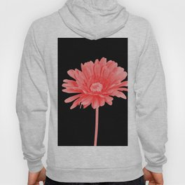 One Pink Gerbera with black background Hoody