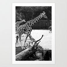 Timeless Giraffe Art Print