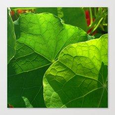 nasturtium leaf Canvas Print