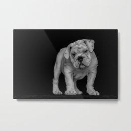 Bulldog Puppy Metal Print