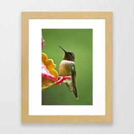 Rainy Day Hummingbird Framed Art Print