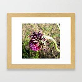 Wyoming Clover Framed Art Print