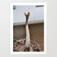 ostrich Art Prints featuring Ostrich :) by IowaShots