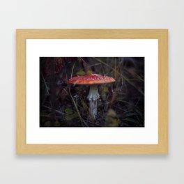 Amanita_1 Framed Art Print