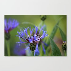 Touch of Purple Canvas Print