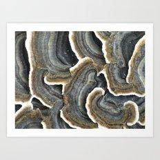 fantastic fungus Art Print