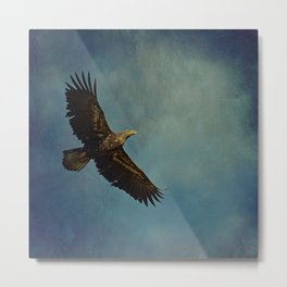 Young Bald Eagle Soaring in the Sky Metal Print
