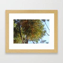 Treesplosion Framed Art Print