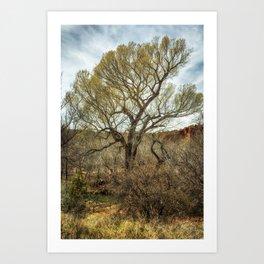 Cottonwood by Oak Creek Art Print