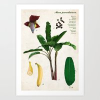 musa Art Prints featuring Musa Paradisiaca by plantage