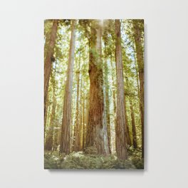 Freelensing the Redwoods Metal Print