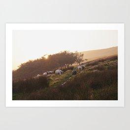Sheep grazing on hillside at sunset. Derbyshire, UK. Art Print
