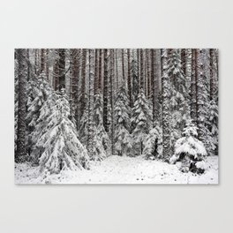 After the snowfall in taiga forest Canvas Print