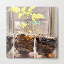 Windowsill Garden Metal Print