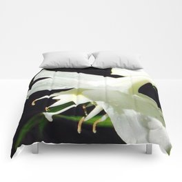 Lilly White Comforters