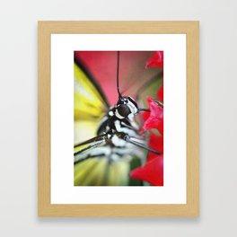 BFX | nourishing woodnymph (butterfly) Framed Art Print
