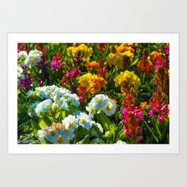 Fruity Bloomers Art Print