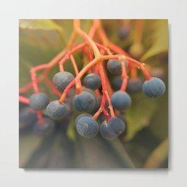 Red Stemmed Purple Berries Metal Print