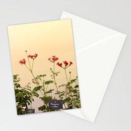 Geraniums (Pelargonium) #6 Stationery Cards