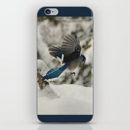 Blue Jay action iPhone Skin