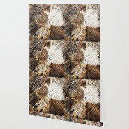 Tree Stump Ring Wallpaper