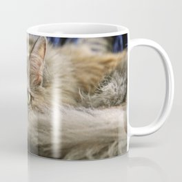 Gray Calico Cat Napping On Chair Coffee Mug