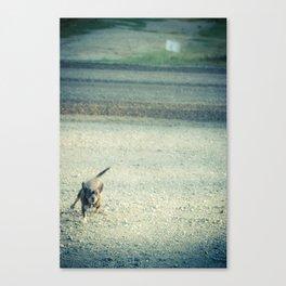 Rabid Chihuahua Canvas Print