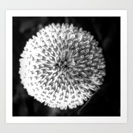 Close up abstract of a round, white flower Art Print