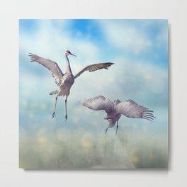 Pair of Sandhill Cranes  dance in the Florida wetlands Metal Print