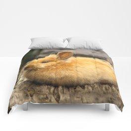 Brown Eyed Bunny Beauty ... Comforters