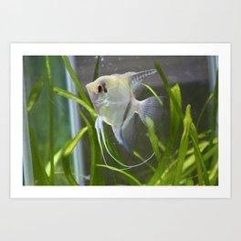 Anglefish Art Print