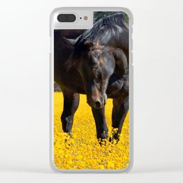 Bay Horse in a Field of Yellow Flowers Clear iPhone Case