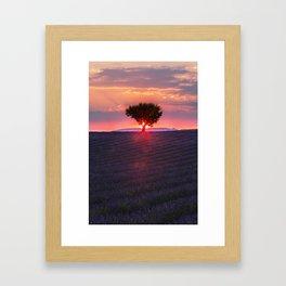 Lavender sunset in Valensole Framed Art Print