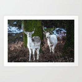 Deers of the Woods Art Print