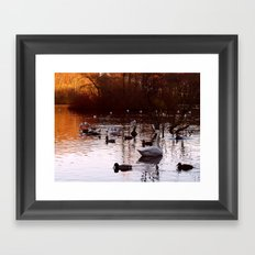 Whooper and Friends Framed Art Print