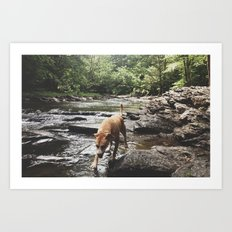 Dog in Summer Two Art Print